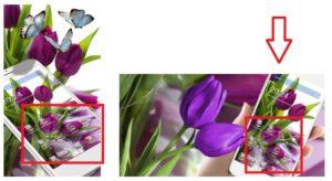 "Тема ""HD Фиолетовый тюльпан обои"""
